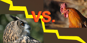 Teen Night Owls Struggle To Learn And >> Night Owls Versus Early Birds Where Do You Stand Bidsketch