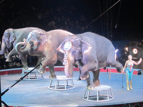 elephant ring barnum